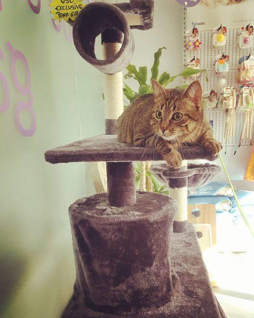 gato sala esp (1)